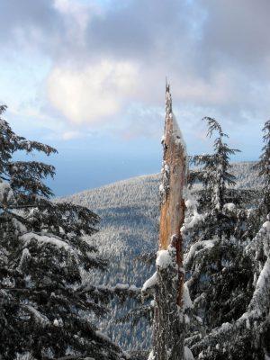Dam-Mountain-Trail-5