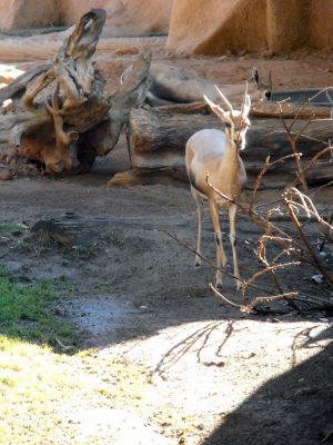 San-Diego-Zoo-2