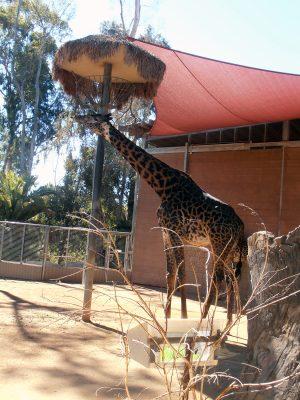 San-Diego-Zoo-6